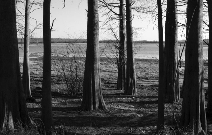 Cypress Trees | Mississippi Backroads