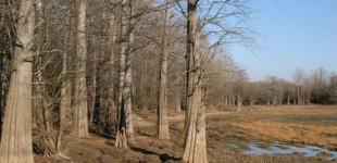 Blufords | Mississippi Backroads