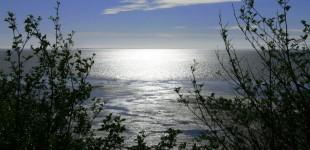 Bruceville | WA Coast