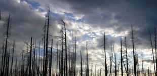 Earth & Sky | Yellowstone National Park