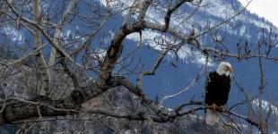 Eagle Eyed | Nye, Montana